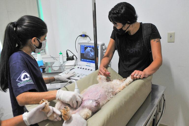 Mais de 18 mil atendimentos em abril no Hospital Veterinário (Hvep)