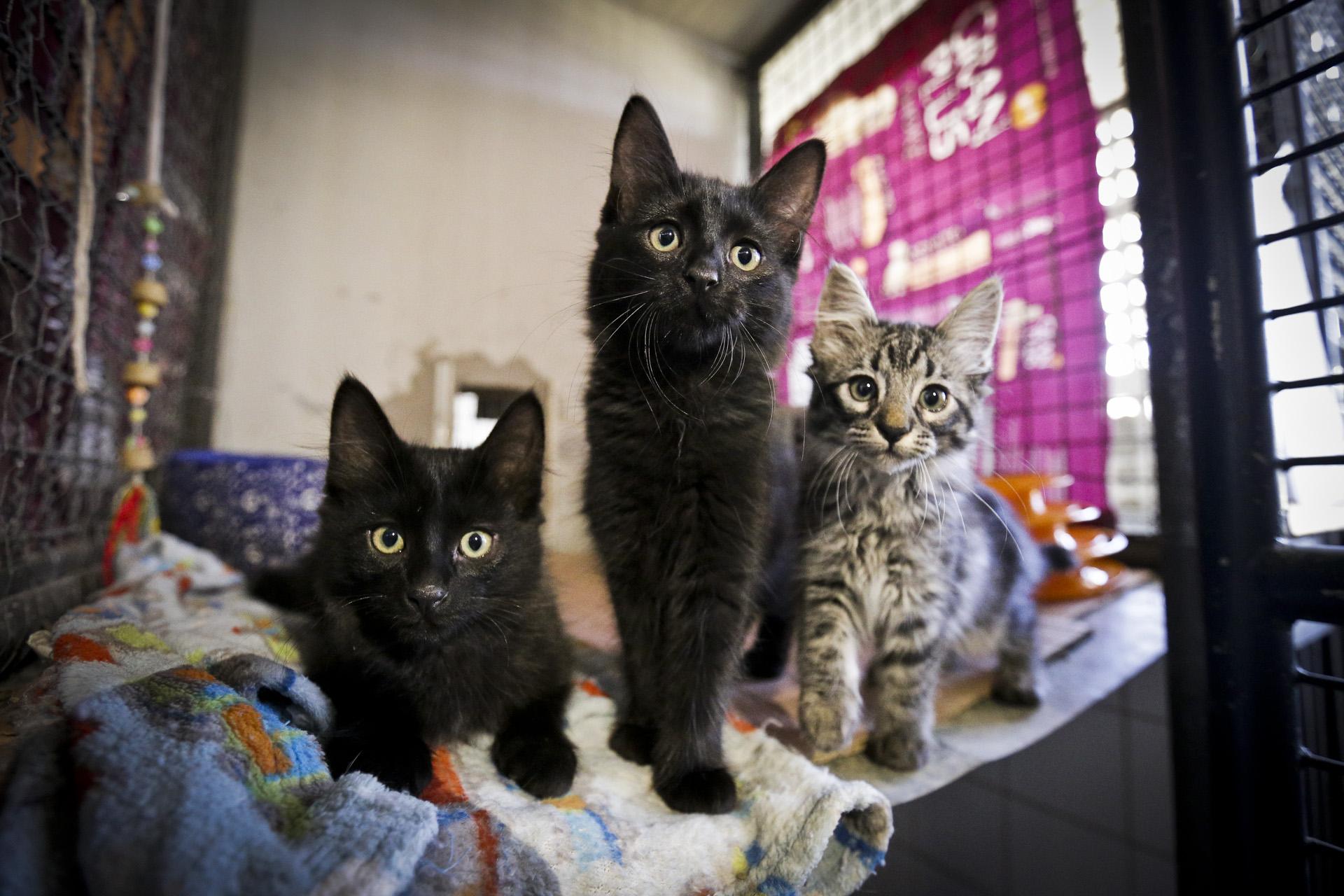Zoonoses tem cães e gatos disponíveis adoção