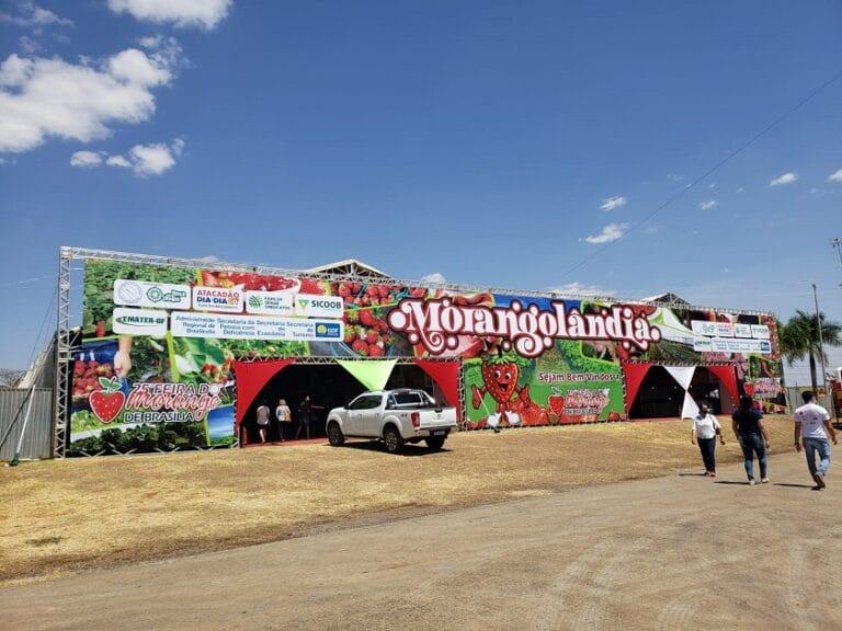 40 estandes de produtores de morango do DF na Morangolândia