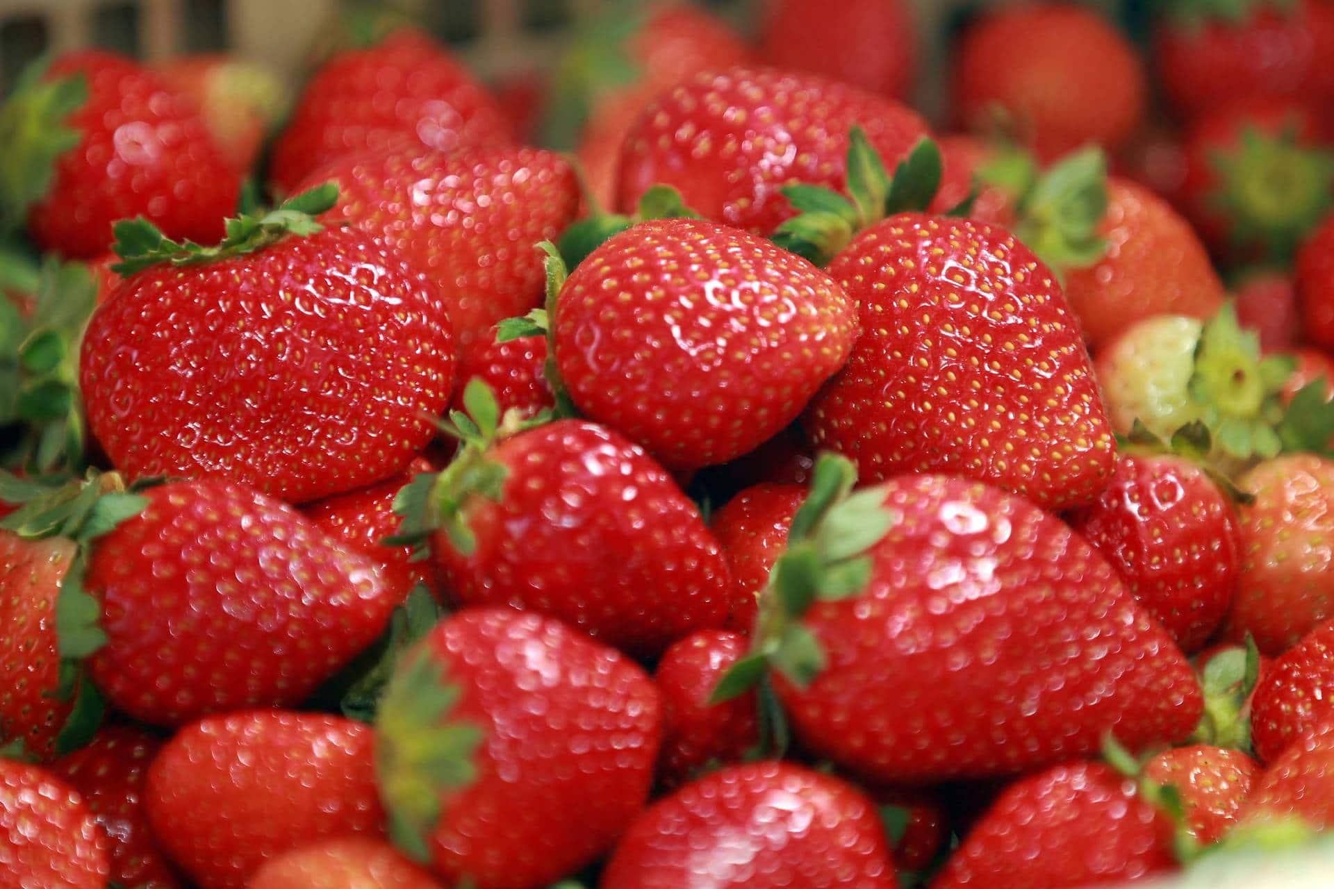 60 mil caixas de morango são vendidos por produtores na feira do Morango em Brazlândia